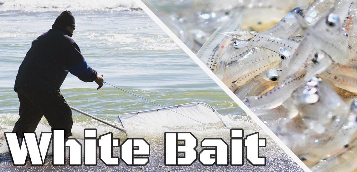Whitebait-MKII
